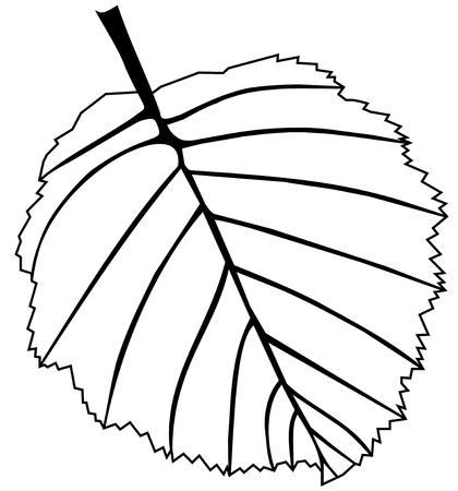 alder: leaf alder, vector, isolated alder leaf,