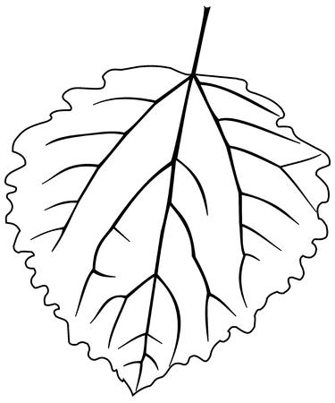 잎 아스펜 포플러, 사시 나무속 tremula 의가, 벡터, 고립 된 미루 나무 포플러, 잎, 일러스트