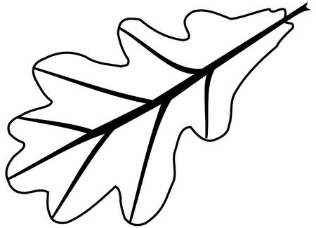 roble, Quercus robur, vector, aislado hoja de roble, Ilustración de vector