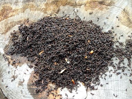 calamity: European spruce bark beetle, (Ips typographus)