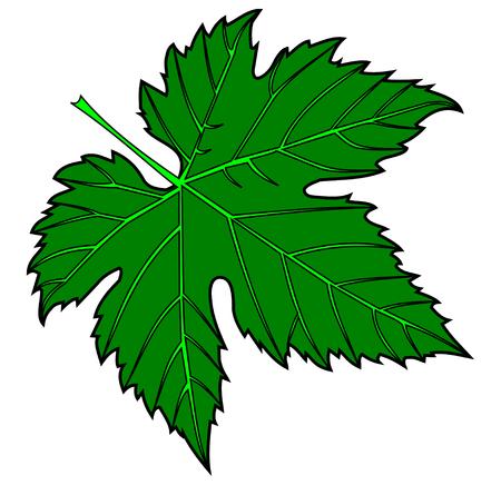 Vecteur, vert feuille de vigne, illustration, jardin, Banque d'images - 57608168