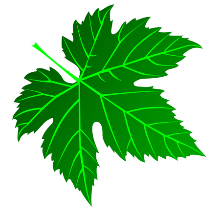 vector,green fig leaf,illustration,garden,