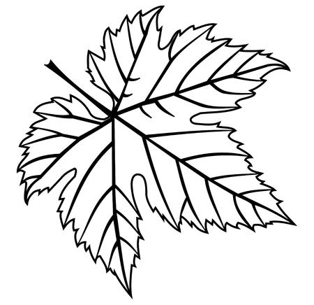 vecteur, feuille de vigne, illustration, jardin,