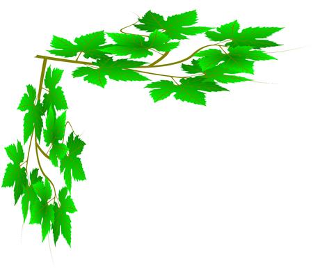 vine leaves: green twig, vine leaves,green vine Illustration