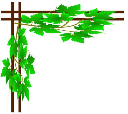 vine leaves: green twig, vine leaves,green vine, Illustration