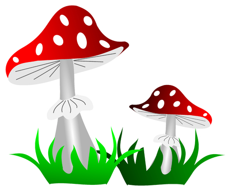 a toadstool: toadstool ,(Amanita muscaria), red mushroom , two toadstools