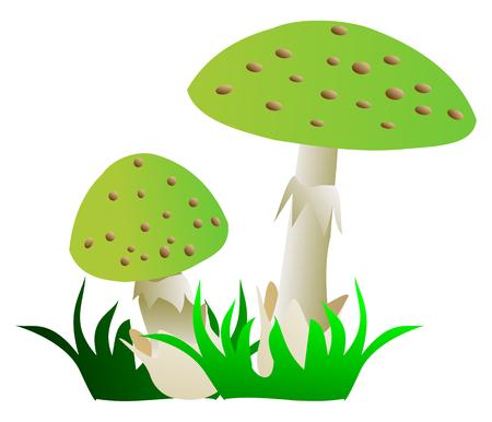 toadstool: toadstool ,(Amanita phalloides), green mushroom , two toadstools