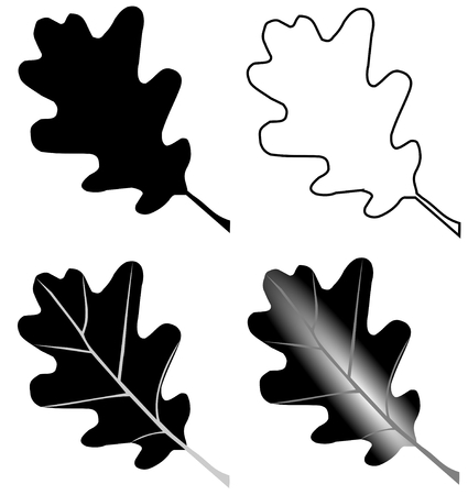 quercus: oak,Quercus petraea, vector, isolated oak leaf, Illustration