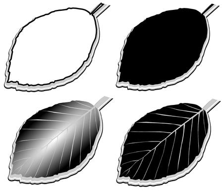beech leaf: beech,(Fagus sylvatica), vector, isolated beech leaf,