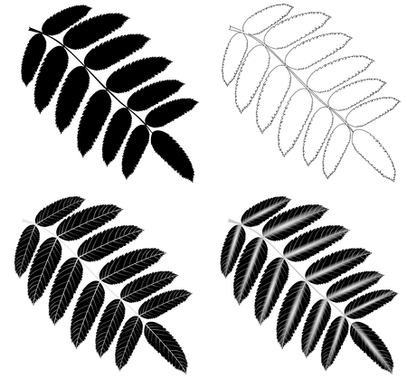 sorbus: Rowan,(Sorbus aucuparia), vector, isolated Rowan leaf,