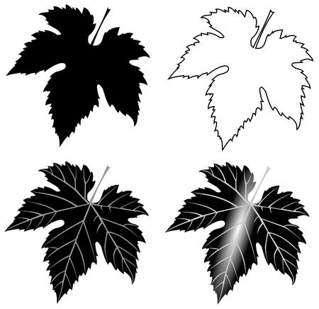 isolé feuille de figuier, vecteur, feuille de vigne, illustration, jardin, Vecteurs