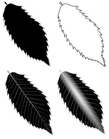 sativa: chestnut ,(Castanea sativa ), vector, isolated chestnut leaf,