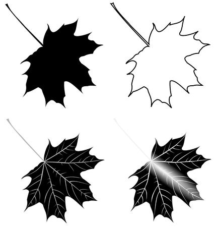 leaf line: maple, Acer , vector, isolated maple leaf, Illustration