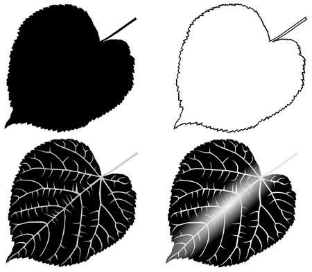 linden: linden, lime, teil, lime-leaf, vector, isolated linden leaf,