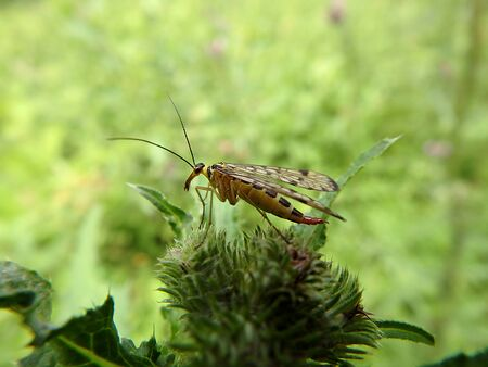 feeler: insect sitting on the grass , insect on a green background Stock Photo