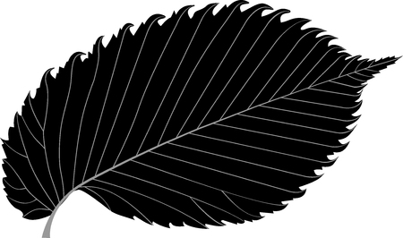 elm: elm, elm leaf, Illustration