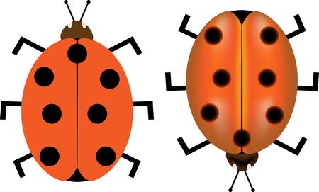 ladybug: ladybird, ladybug,Ladybird vector illustration,