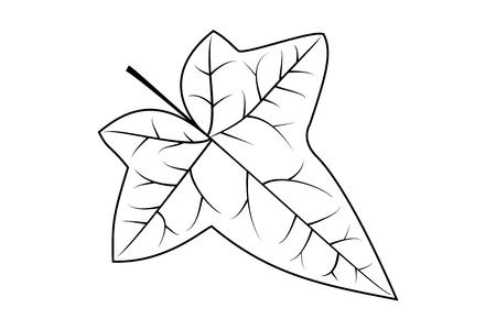 Klimop, klimop blad, vector,