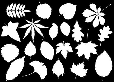 hojas de los árboles de hoja conjunto, siluetas, Ilustración de vector