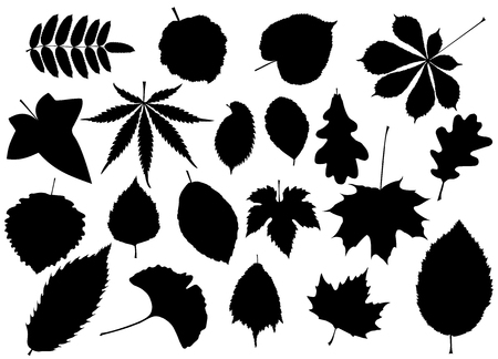 tree silhouettes: tree leaves set,silhouettes leaf, Illustration