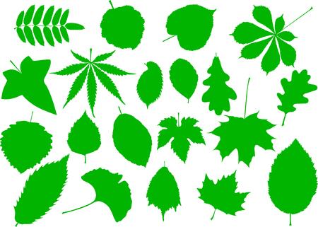 tree leaves set,silhouettes leaf, Illustration