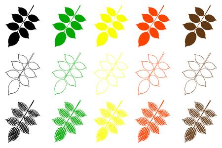 horticultural: walnut leaf - color set, walnut leaf, Illustration