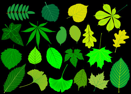 tree leaves green set,silhouettes leaf,