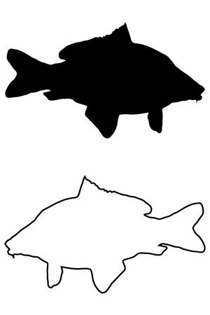 carp silhouette vector, (Cyprinus carpio),