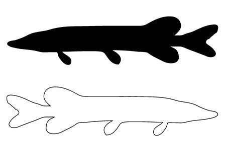 pike silhouette vector, (Esox lucius), Illustration