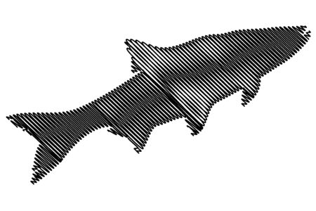 asp: asp silhouette vector, (Aspius aspius),