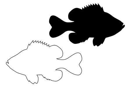 Pumpkinseed Sunfish silhouette vector, (Lepomis gibbosus),