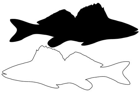 zander silhouette vector, (Sander lucioperca),