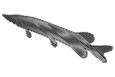 Pike silhouette vector, (Esox lucius),