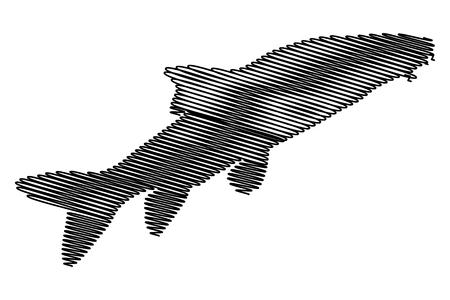 barbus: Vector silhouette of Barbel fish, (Barbus barbus),