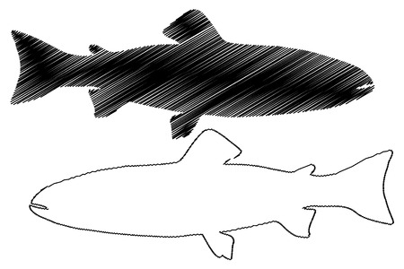 Trout silhouette vector, (Salmo trutta fario), (Oncorhynchus mykiss) Illustration