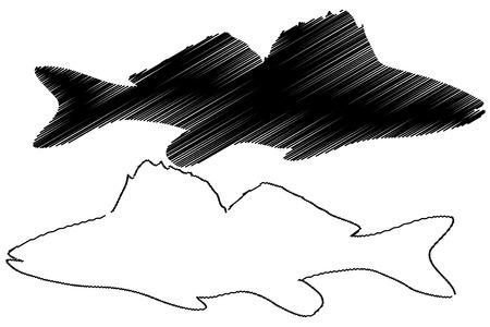 Zander silhouette vector, (Sander lucioperca), Иллюстрация