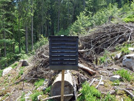 Black pheromone traps insects, Forest preservation, pheromone trap for bark beetle Stock Photo
