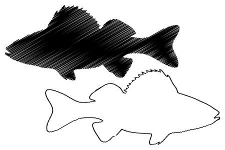 perch silhouette vector, (Perca fluviatilis), Illustration