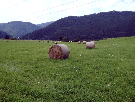 Round bales of straw in the meadow, Hay bales on a green meadow Stock Photo