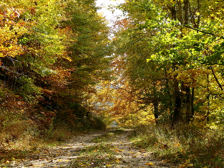 Forest gravel road - autumn, Forest stone path, Gravel road with autumn foliage,