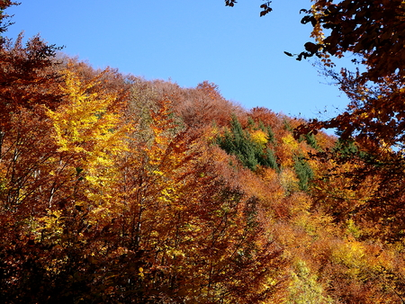 Mixed forest at the of autumn, Beautiful autumn mixed forest