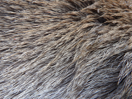 Close up of a deer fur as background, Furs of red deer