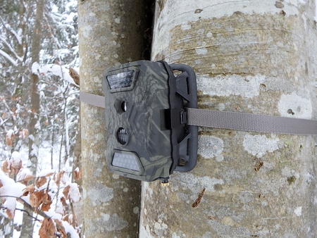 Photo traps in forests, Camera trap with infrared light and motion detector attached with straps on a tree