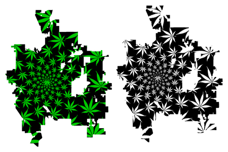 Colorado Springs city (United States of America, USA, U.S., US, United States cities, usa city)- map is designed cannabis leaf green, City of Colorado Springs map made of marijuana (marihuana,THC) foliage, Illustration
