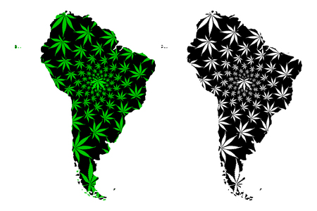 South America continent - map is designed cannabis leaf green and black, Latin America map made of marijuana (marihuana,THC) foliage,