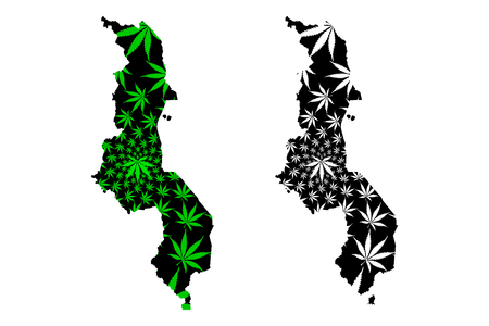 Malawi - map is designed cannabis leaf green and black, Republic of the Malawi map made of marijuana (marihuana,THC) foliage, 일러스트