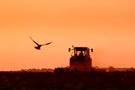 plough land: Tractor Plowing in dusk on sunset with crows Stock Photo