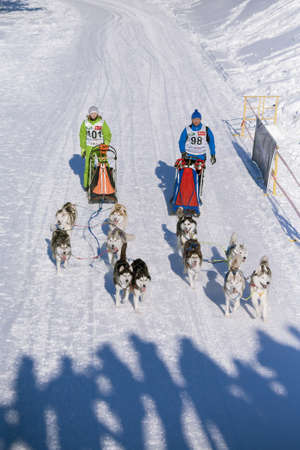 huskys: MINSK-BELARUS - JANUARY 27, 2013: Unidentified participant competes in ZAVIRUHA -2013 sledding racing cup  in January 27, 2013 in Minsk, Republic of Belarus