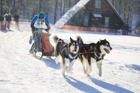 MINSK-BELARUS - JANUARY 27, 2013: Unidentified participant competes in ZAVIRUHA -2013 sledding racing cup  in January 27, 2013 in Minsk, Republic of Belarus