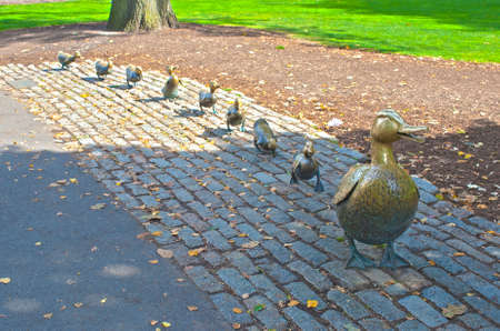 Mommy Duck and Eight Little Ducks as the  Symbol of Boston located in Public Garden  in Massachusetts, USA  HDR Image  Horizontal Composition